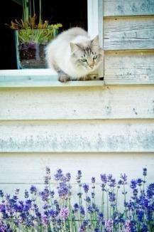 ネコと窓.jpg