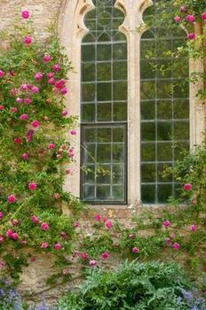 窓とクライミングローズ2.jpg