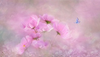 flower-コスモス2b.jpg