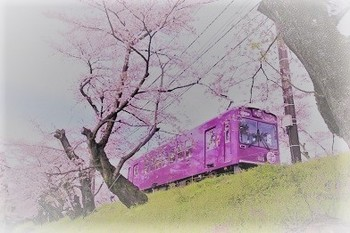 sakuratodensya_2 (b).jpg