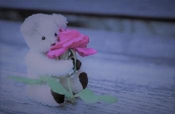 teddy-ぬいぐるみ0 (2)2.jpg