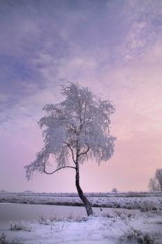 winter-tree-2.jpg